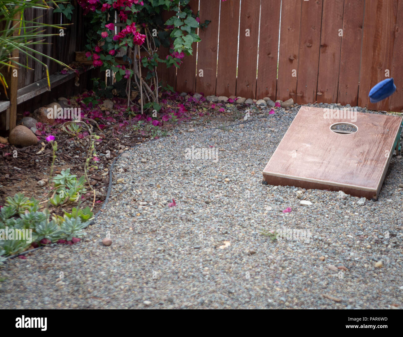 Corn hole game with bean bag being tossed - Stock Image