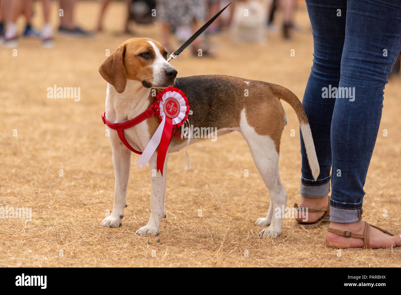 First Prize Rosette Stock Photos & First Prize Rosette Stock Images