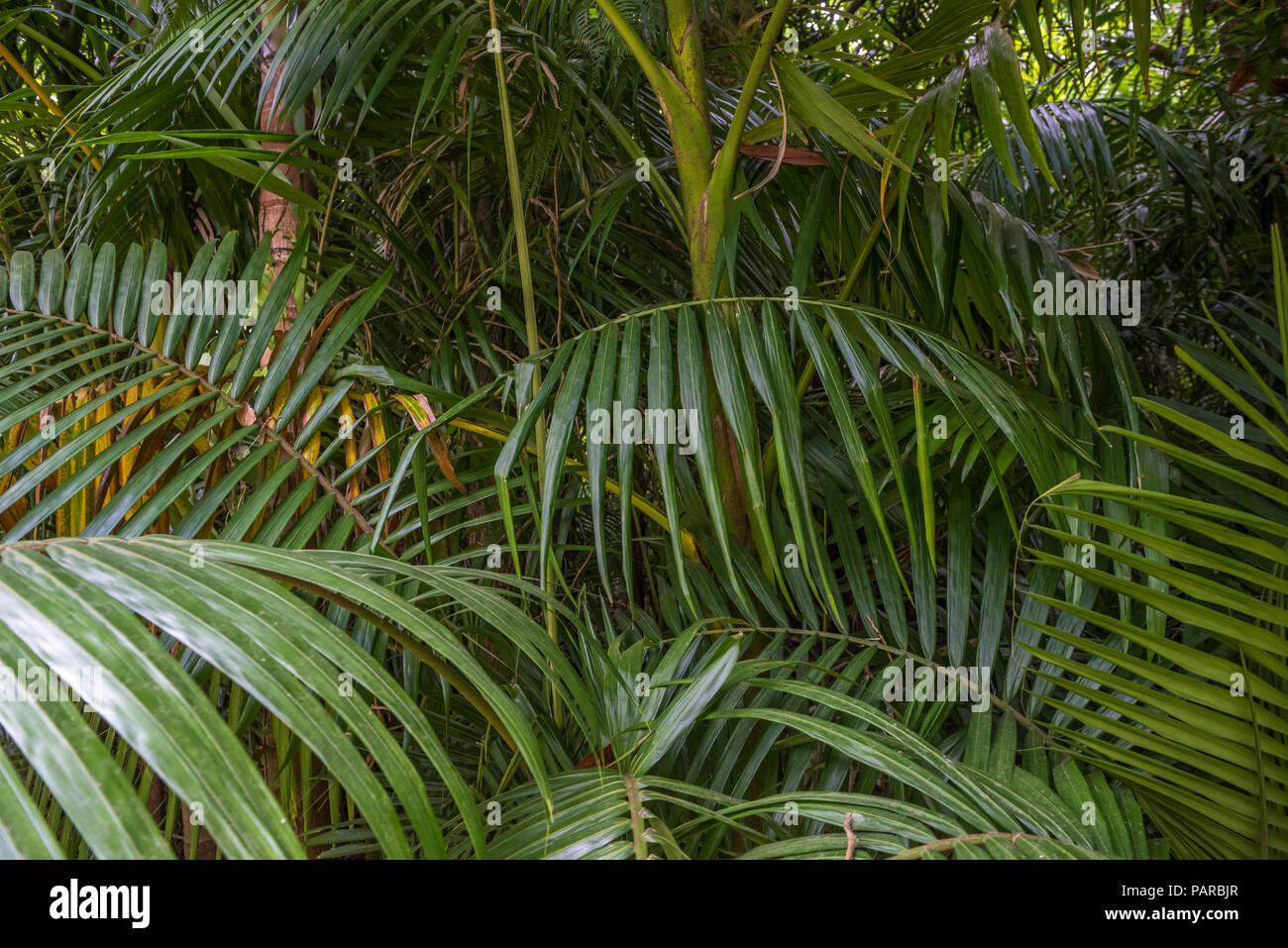 tropical palm leaves green rainforest background stock photo