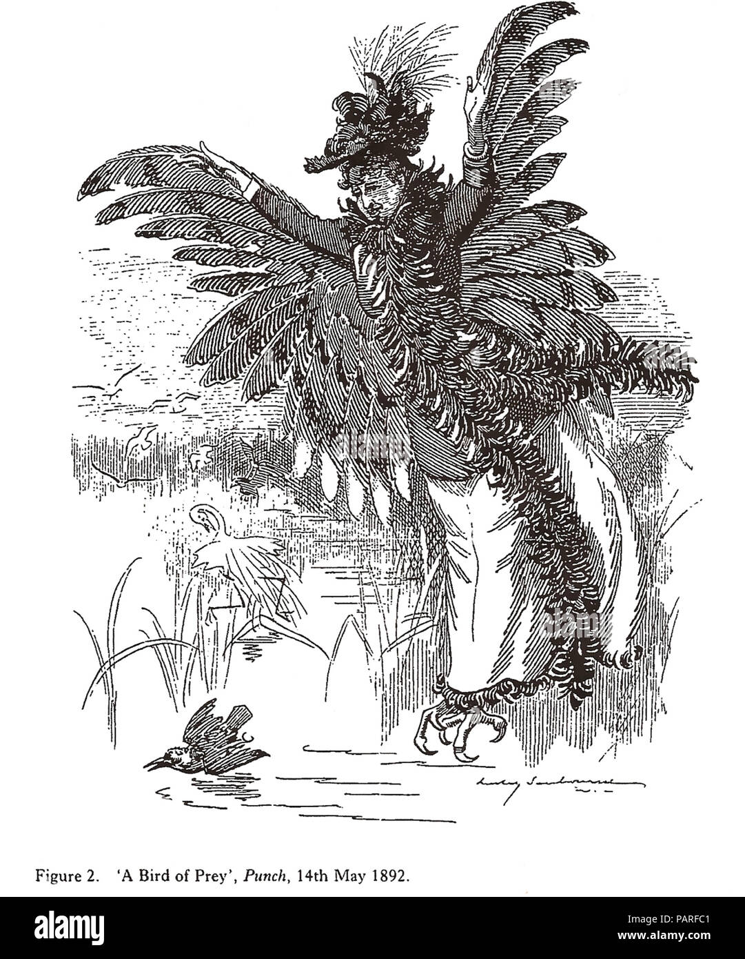 FEATHERED HAT - bird feathers were fashionable in late Victorian/Edwardian society a style opposed by founder members of the RSPB. Punch cartoon. - Stock Image