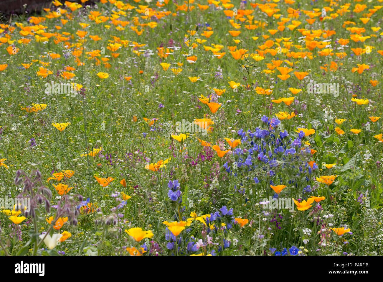 Wildflowers in gardens Sizergh gardens Cumbria UK - Stock Image
