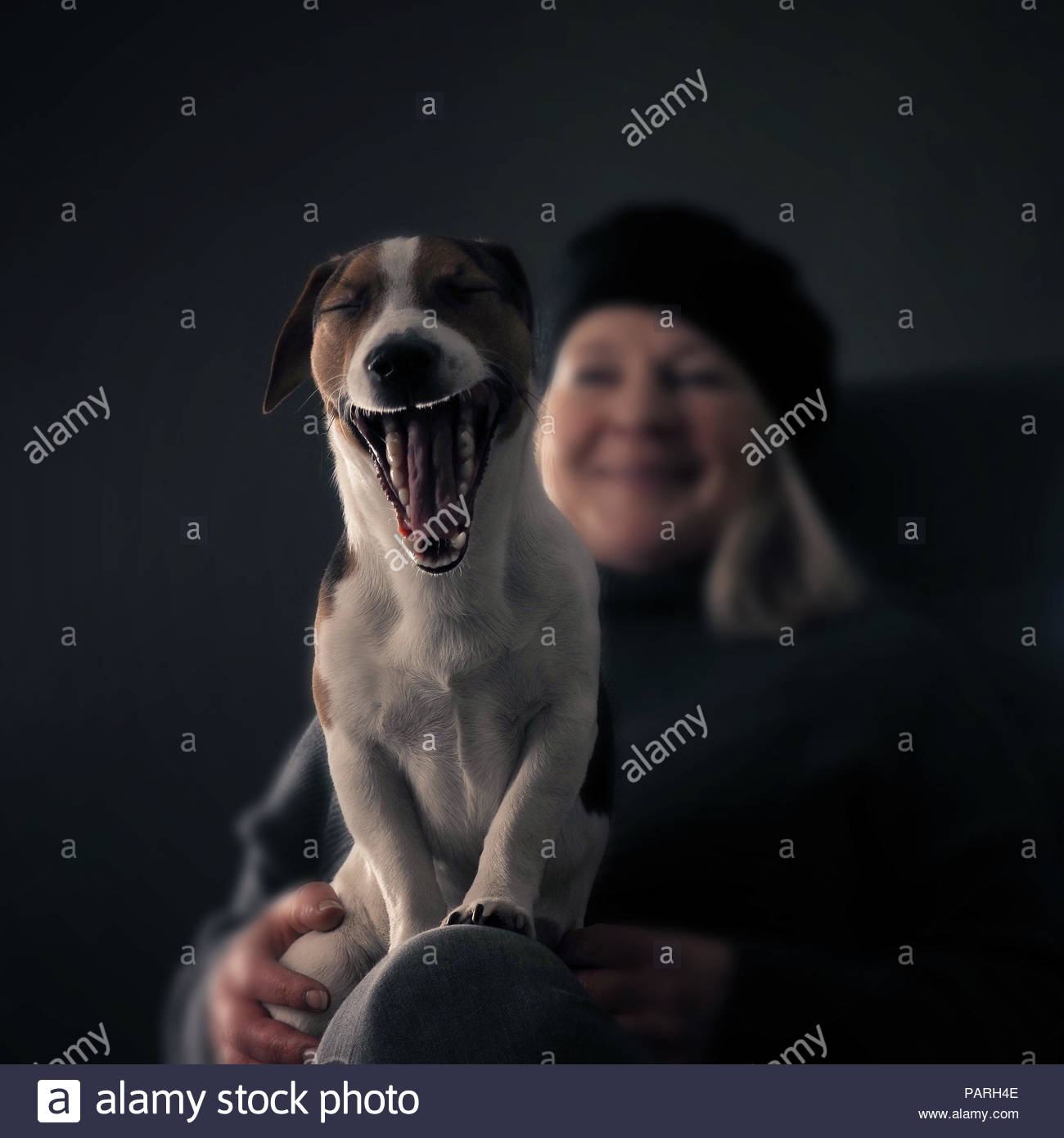 Midsection of a woman sitting with her dog at home - Stock Image