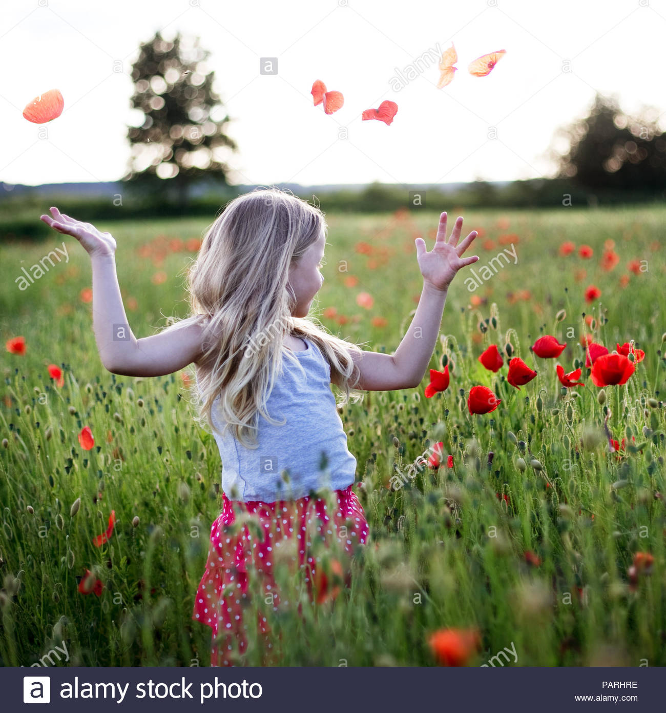 A girl playing in a field full of red poppy flowers - Stock Image