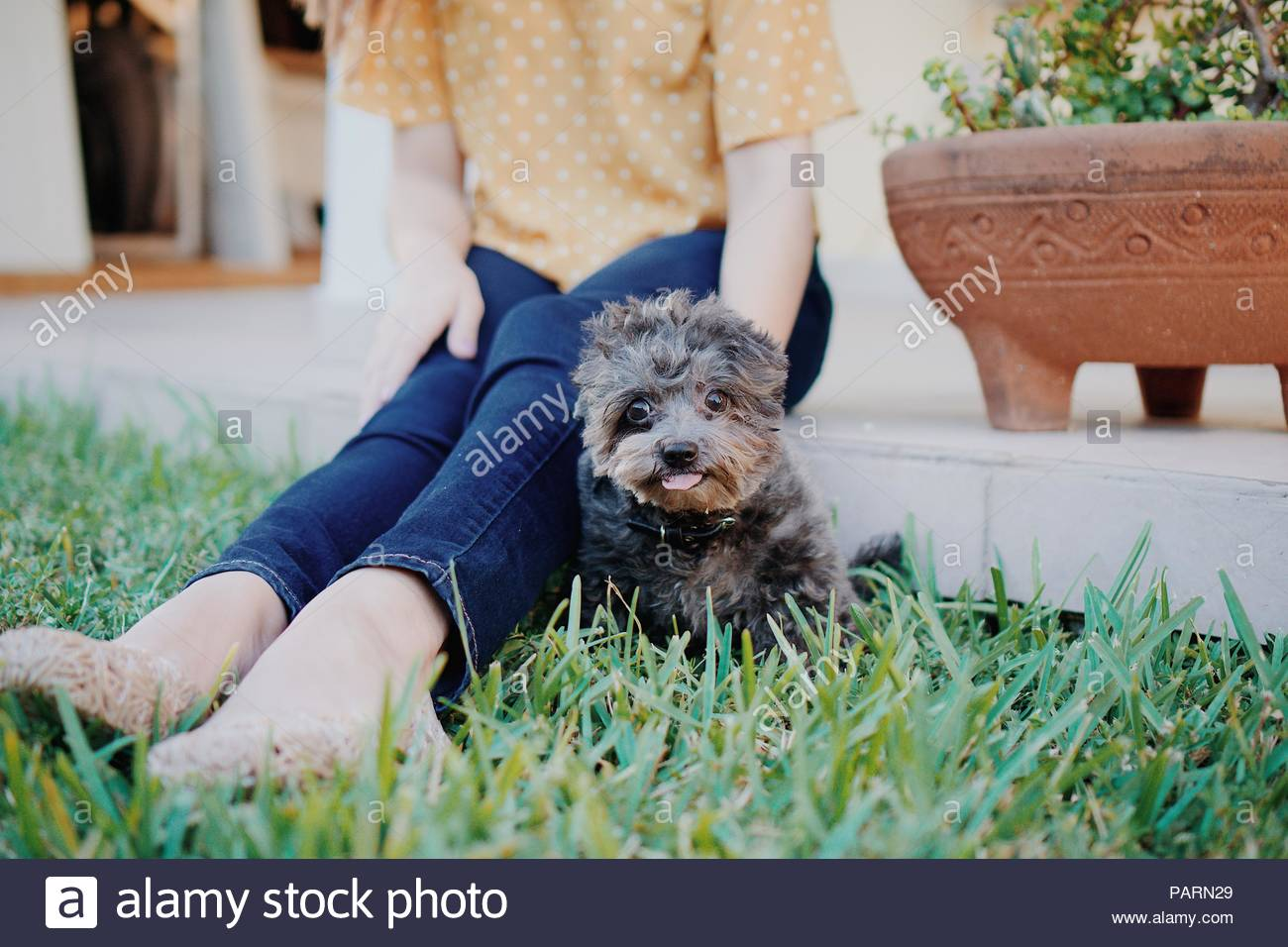 A woman petting her dog - Stock Image