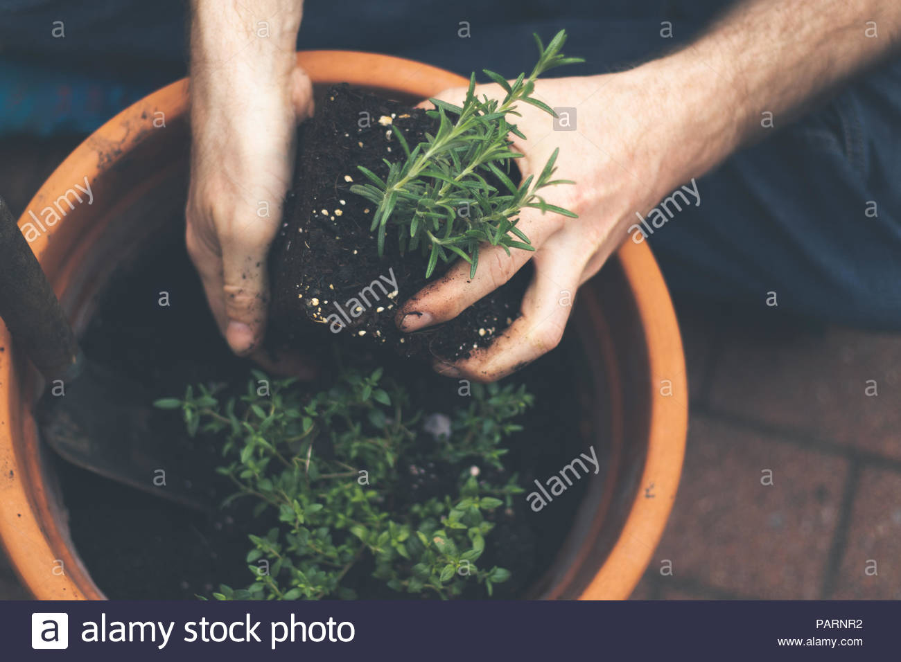 High angle view of human hands holding a potted plant - Stock Image