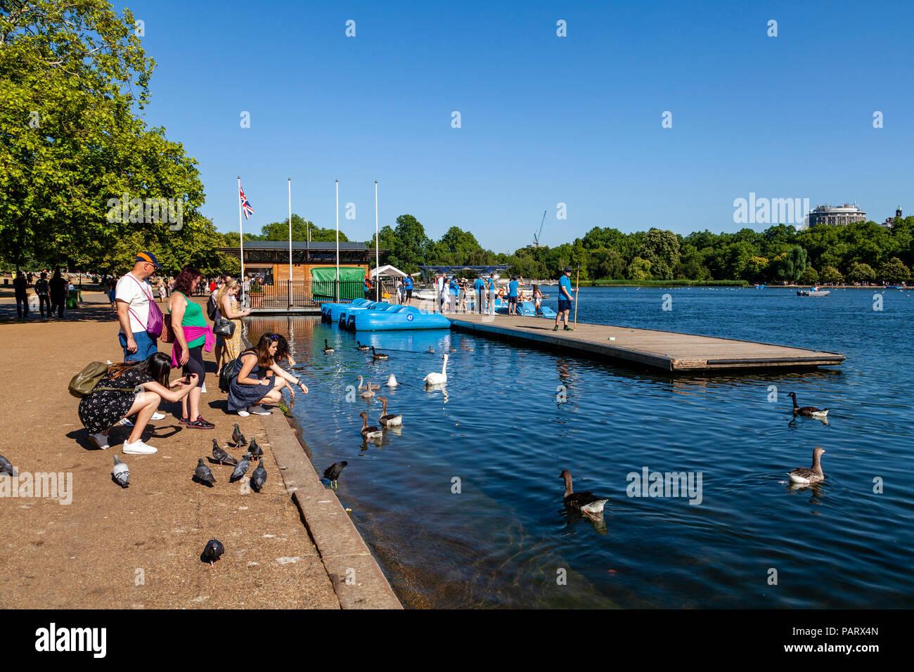 People Feeding The Birds, The Serpentine, Hyde Park, London, England - Stock Image