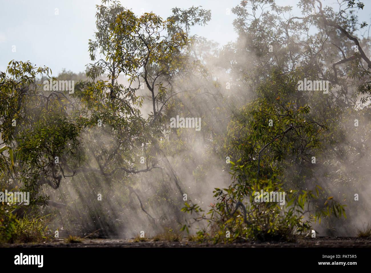 Papua New Guinea, Dei Dei Hot Springs, Fergusson Island. Steam rising through trees from hot spring. - Stock Image