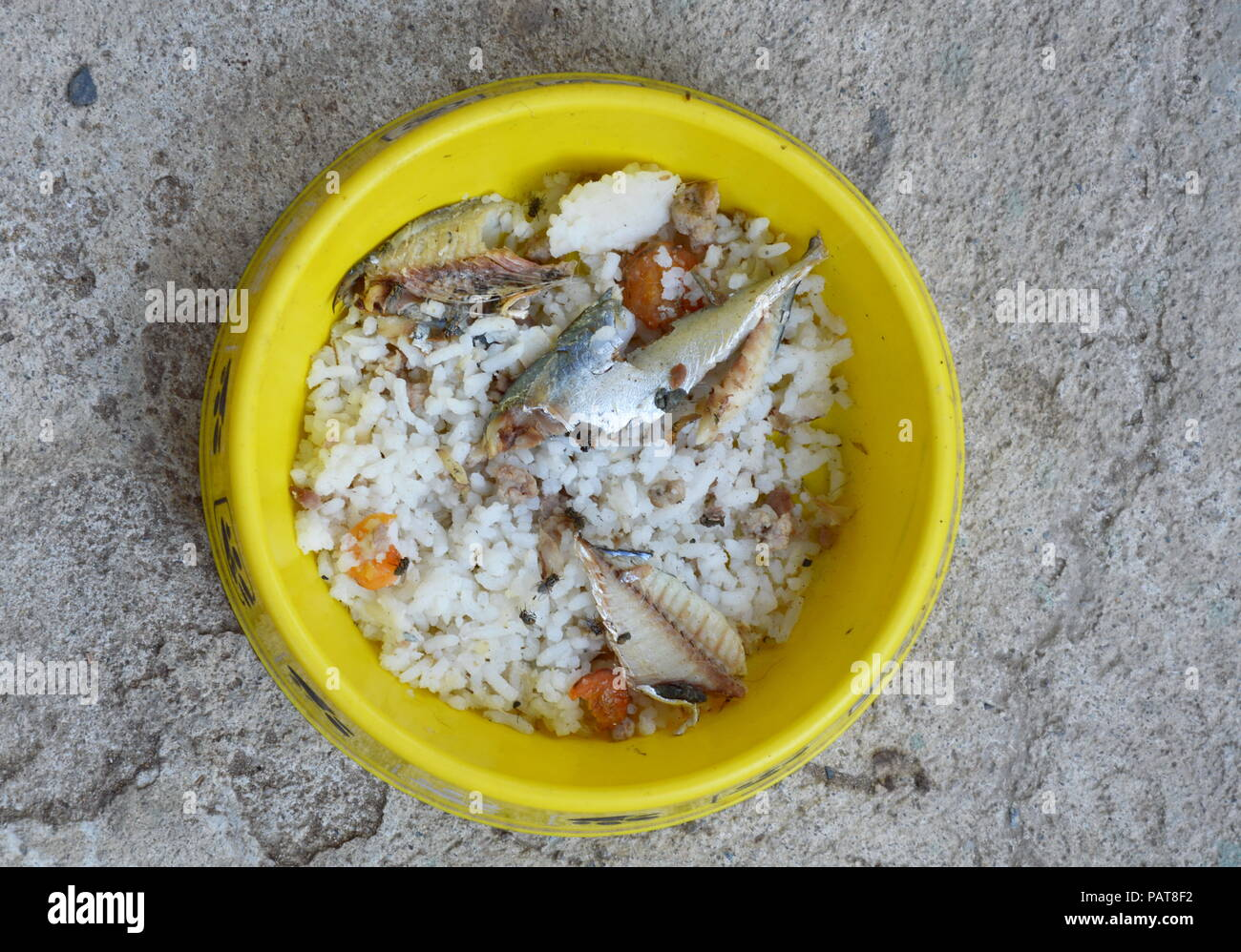fly on mackerel with rice after cat feeding left over in yellow bowl - Stock Image