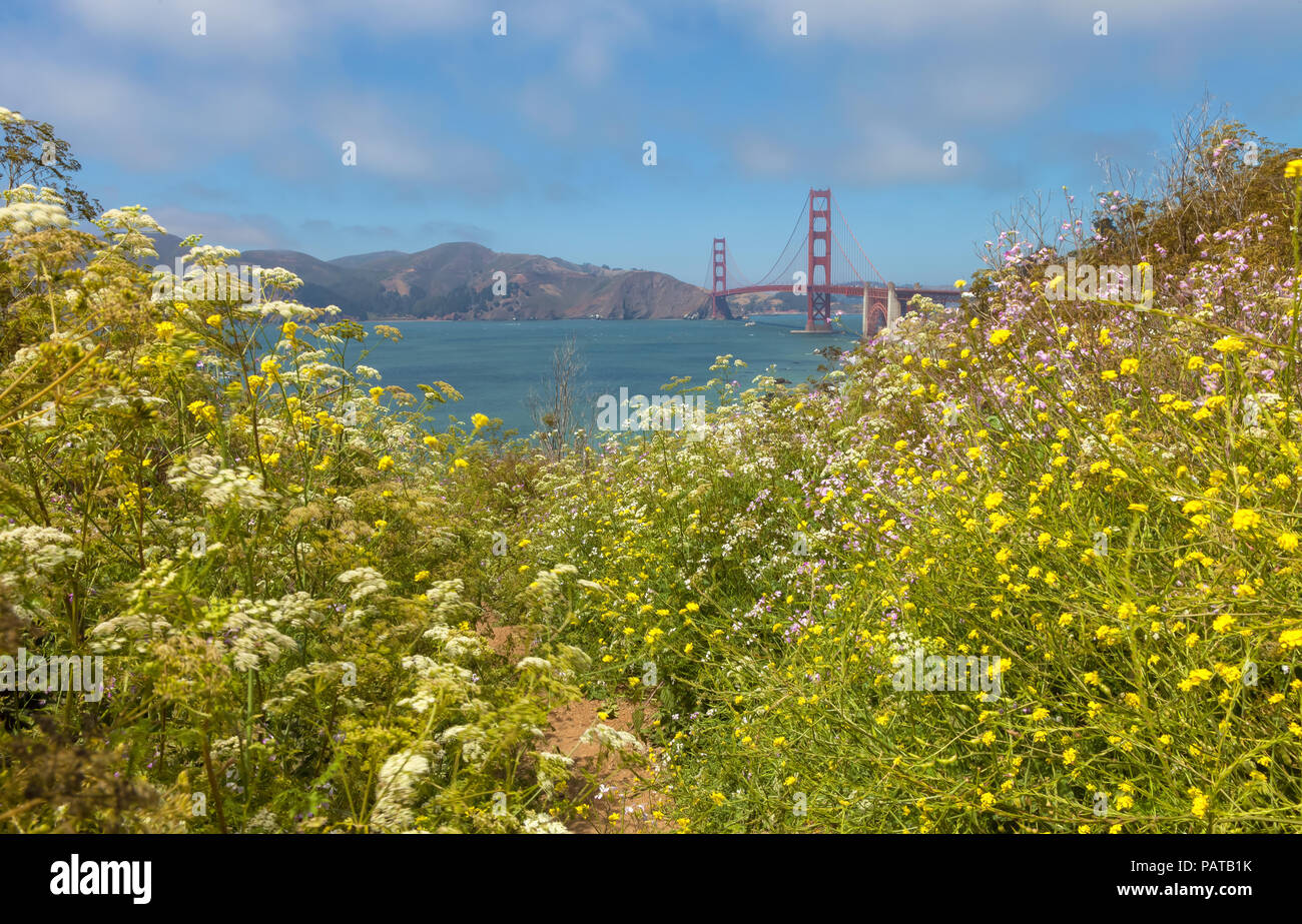 Wildflowers bloom along the Batteries to Bluffs trail with Golden Gate Bridge in background, San Francisco, California, United States. - Stock Image