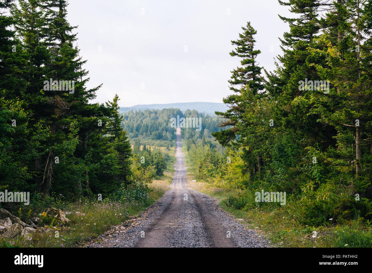 A dirt road and pine trees in Dolly Sods Wilderness, Monongahela National Forest, West Virginia. - Stock Image