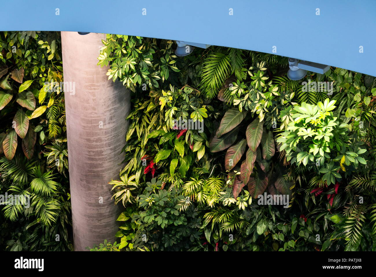 Vertical Living Wall Vertical garden, green living wall with flowers and plants, indoors