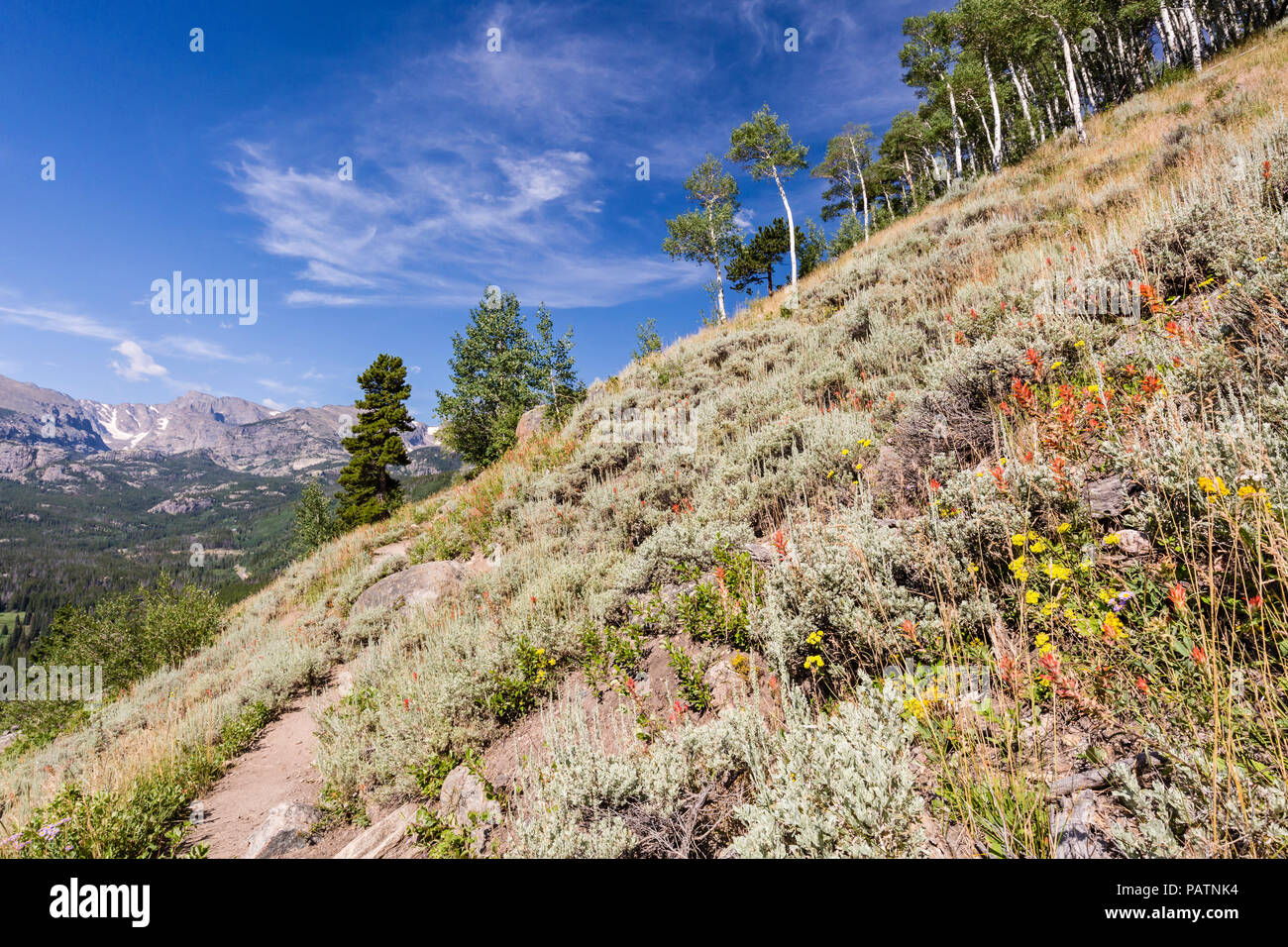 Indian Paintbrush wildflowers line the steep mountainside on Bierstadt Moraine, overlooking the Continental Divide in Rocky Mountain National Park, Co - Stock Image