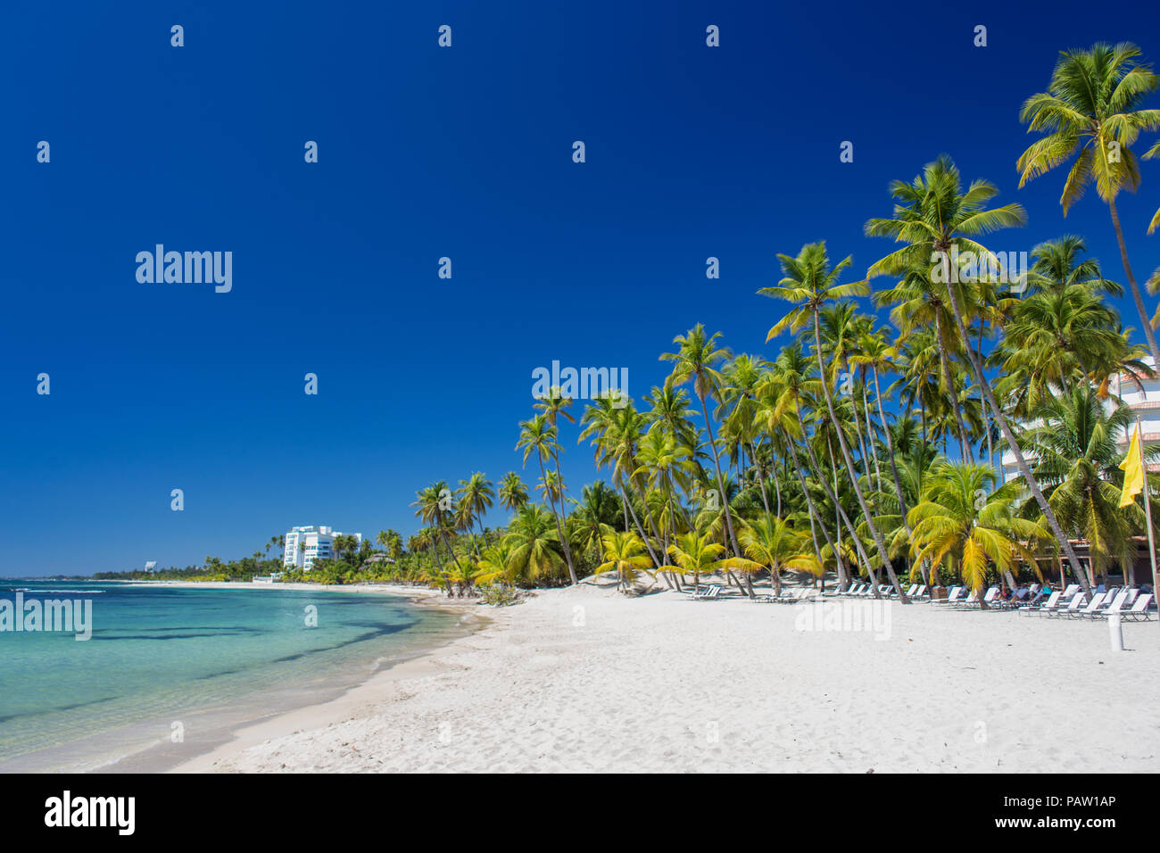 Tropical sand Beach on the Caribbean Sea. Clear blue sea and tall palm trees - Stock Image