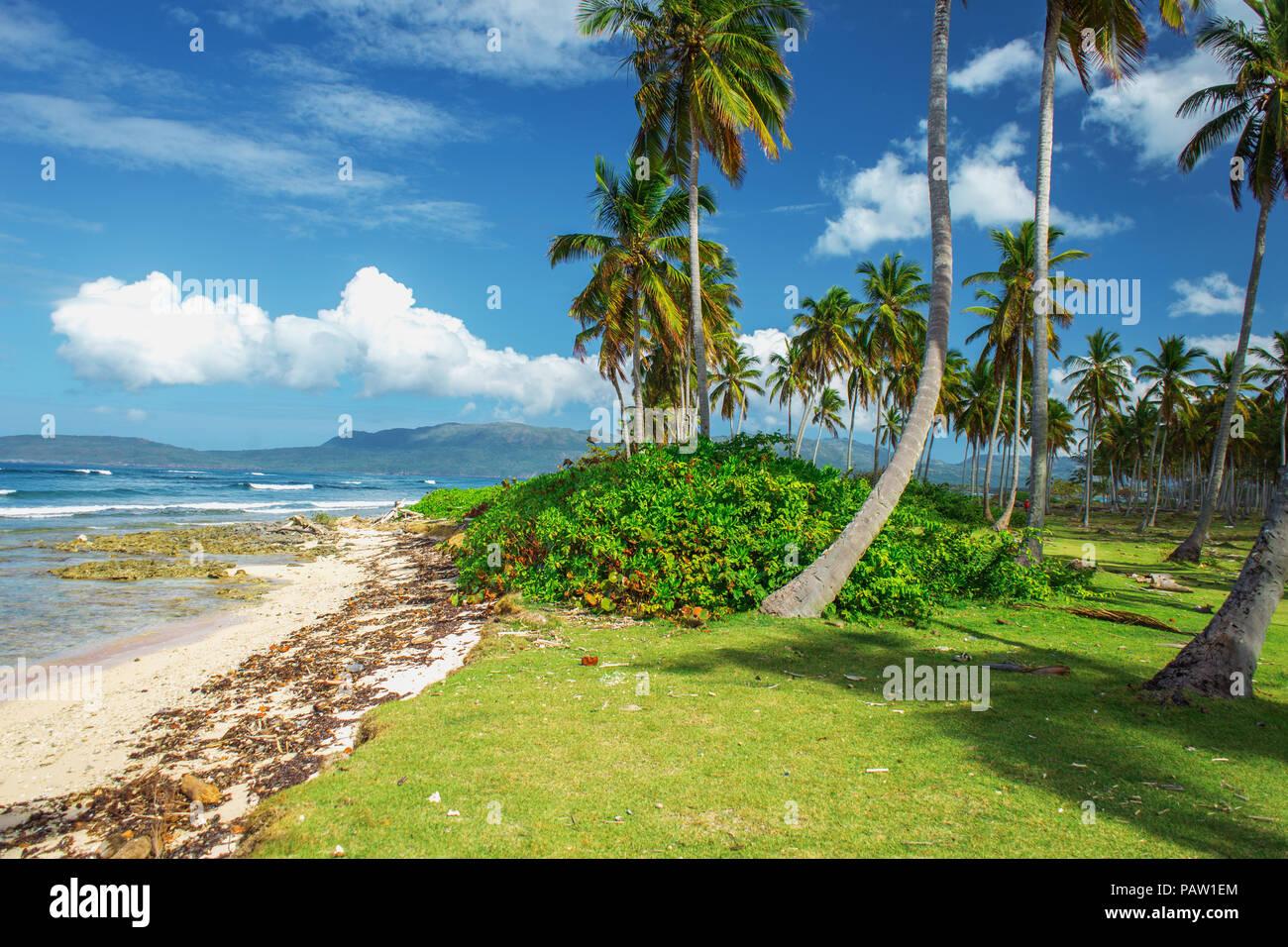 stunning picturesque scenic beautiful Caribbean landscape, Dominican Republic. Sea, palms, blue sky - Stock Image