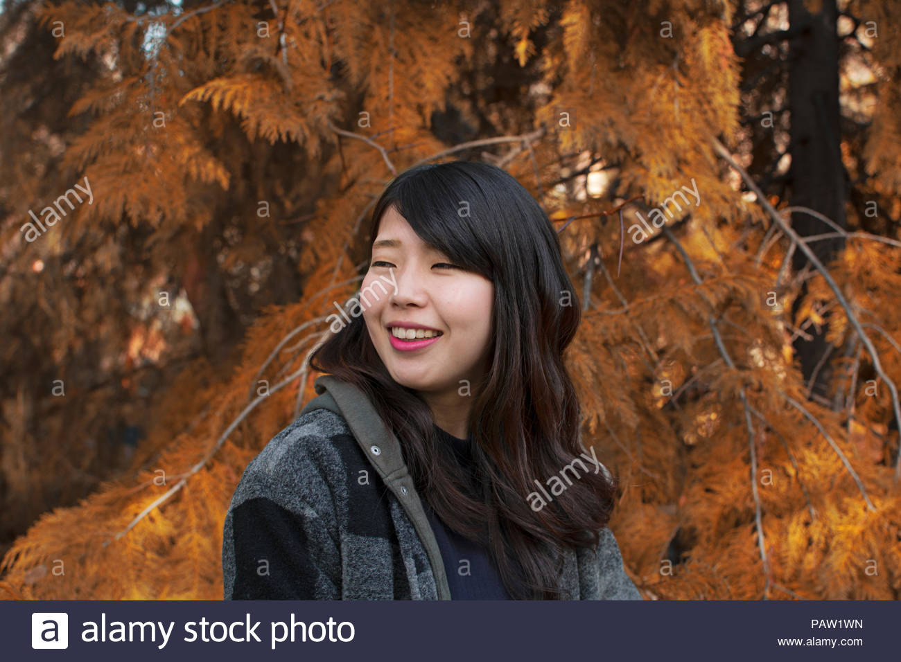 Portrait of young woman in a forest in autumn - Stock Image