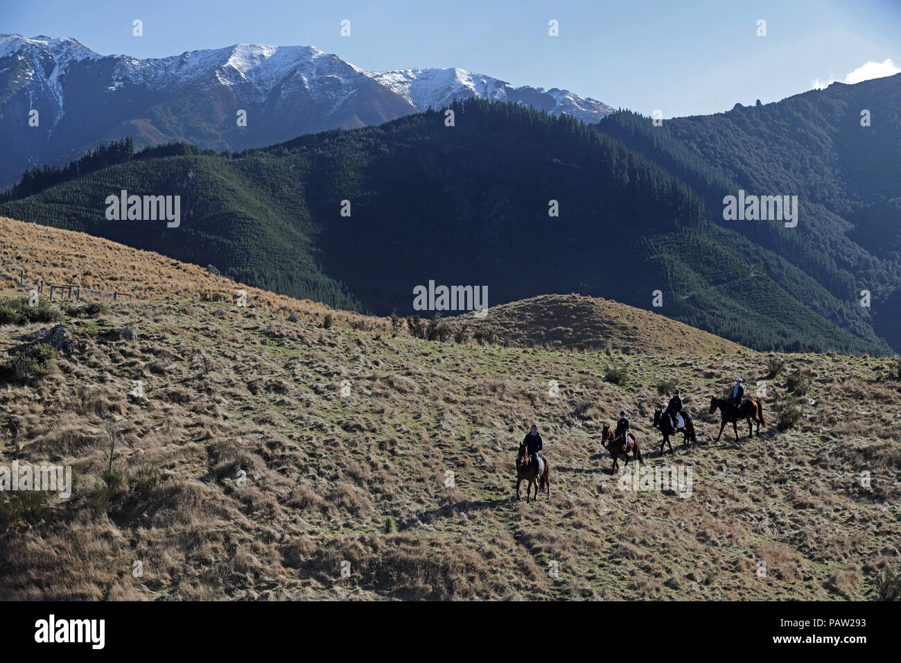 Picture by Tim Cuff - 17 July 2018 - Travel feature on the thermal spa resort of Hanmer Springs, Hurunui District, New Zealand: horse trekking - Stock Image