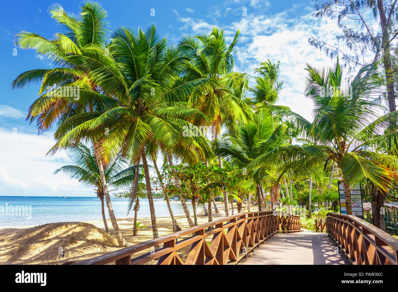 wooden bridge among the palm trees on the beach - Stock Image