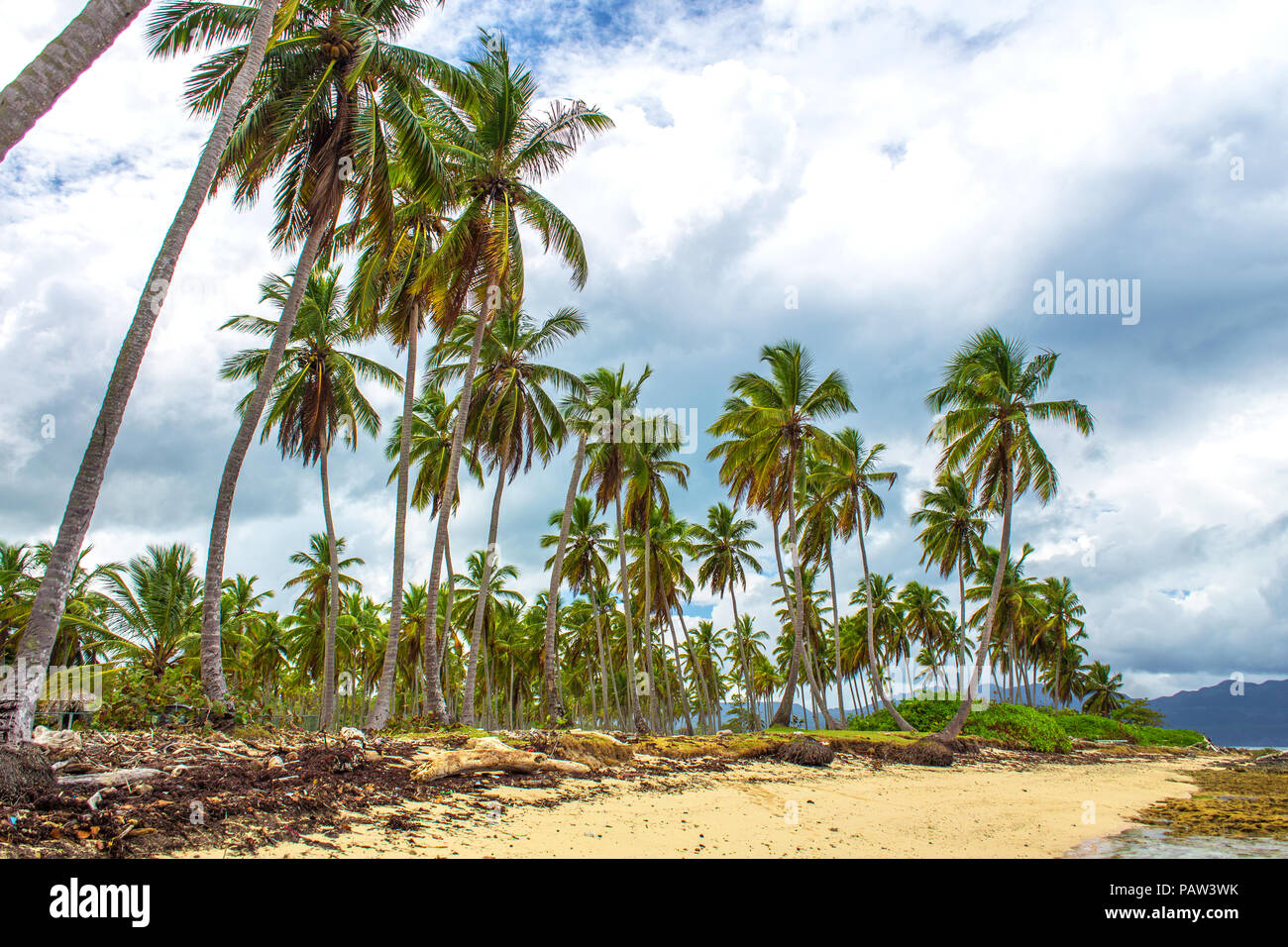 Tropical beach with high palm trees, sand and seaweed on background of grey sky with clouds. Caribbean storm - Stock Image