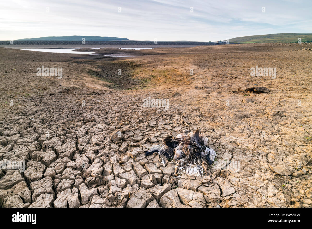 Selset Reservoir, Lunedale, County Durham. Wednesday 25th July 2018. UK Weather.  With temperatures expected to reach 33 degrees centigrade in some parts of the UK, not only do humans suffer in the heat, but so do animals.  In northern England the sad remains of a desiccated bird lying on the sun-baked shores of Selset Reservoir creates a scene more reminiscent of the African plains than the North Pennines. David Forster/Alamy Live News - Stock Image