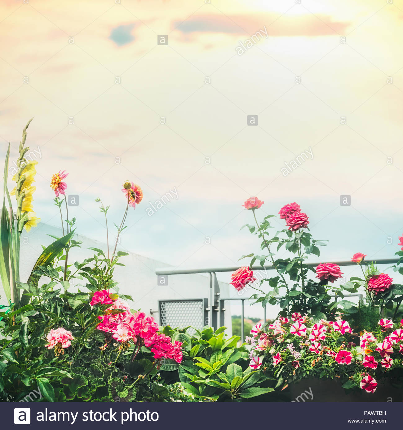 Beautiful flowers blooming on a sunny day stock photo 213238917 alamy beautiful flowers blooming on a sunny day izmirmasajfo