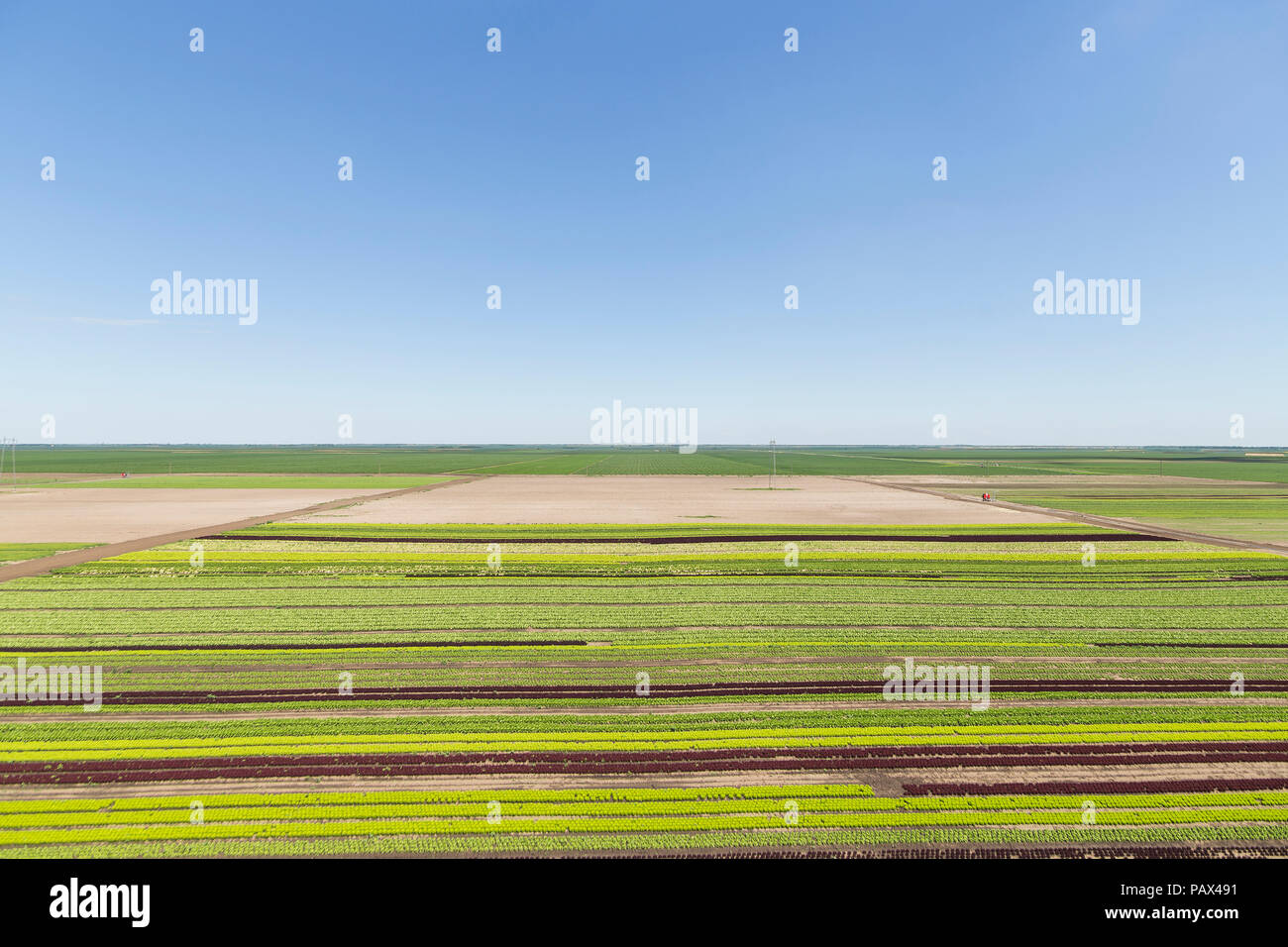 Vast field of industrial agricultural produce - Stock Image