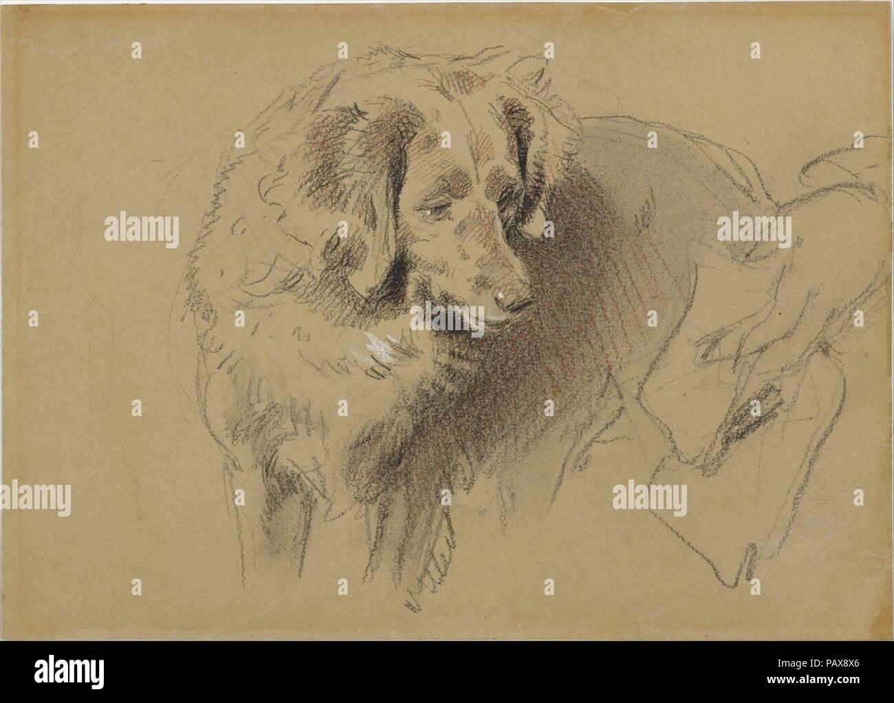 Study of a Dog. Artist: Sir Edwin Henry Landseer (British, London ...