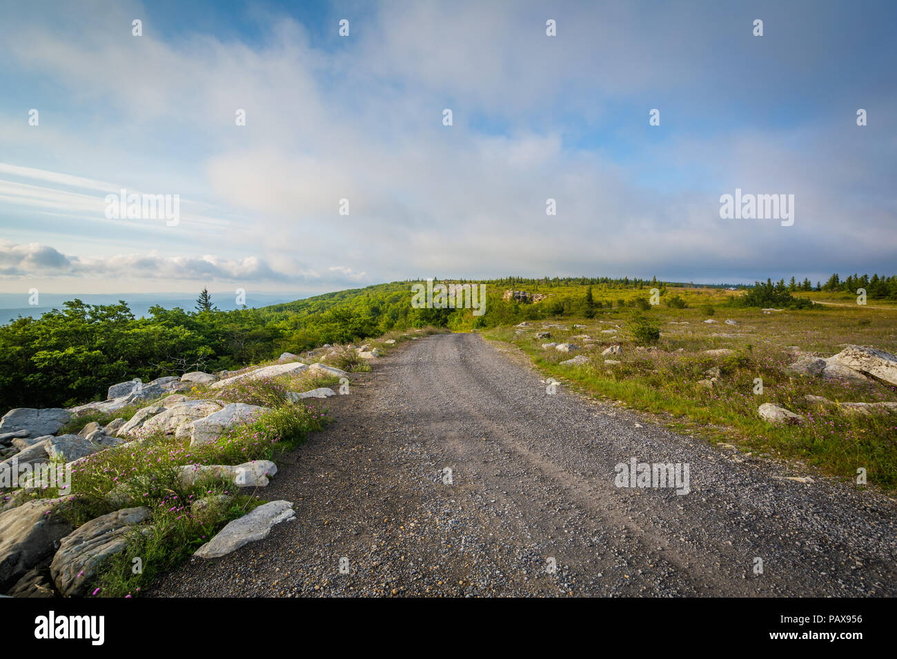 Dirt road in Dolly Sods Wilderness, Monongahela National Forest, West Virginia. - Stock Image