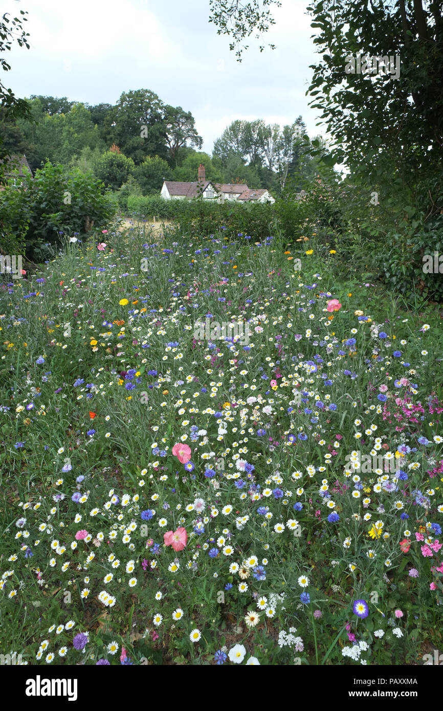 Wildflowers in an English Country garden, Shropshire. - Stock Image