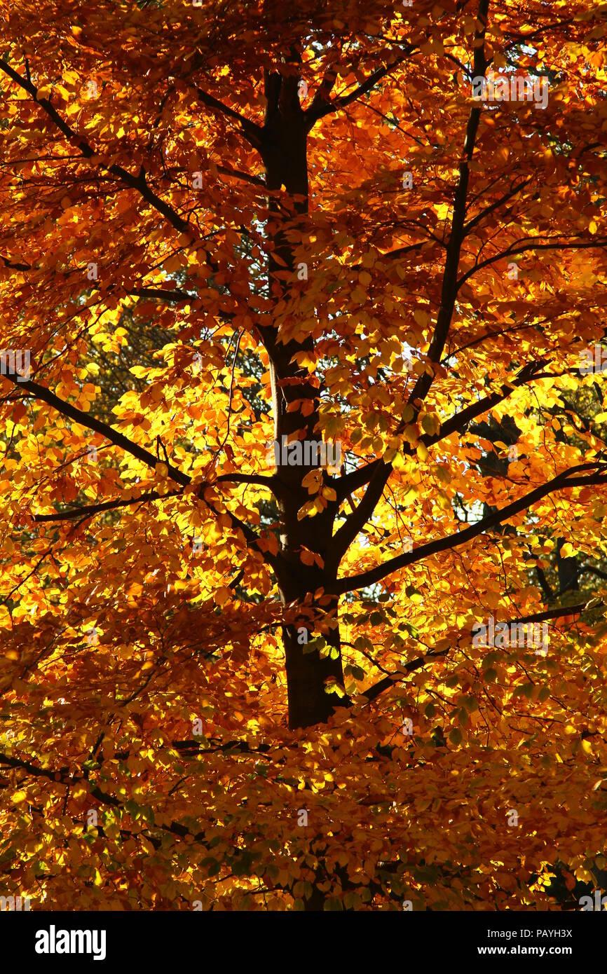 Autumn Leaves Autumn The Fall Season Seasons Changing Seasons