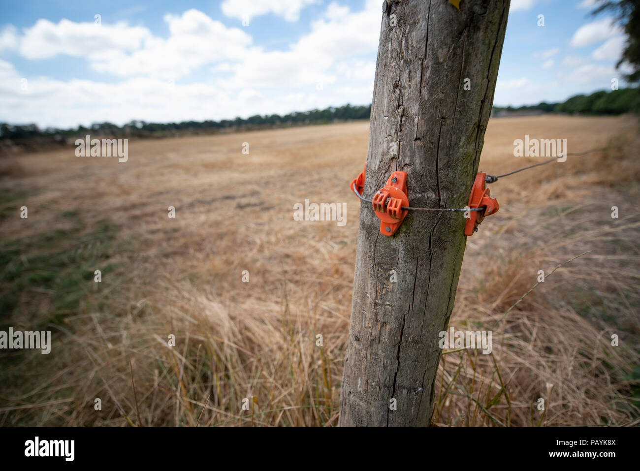 Electric fence attachment around a post on a farm, Cotswolds - Stock Image