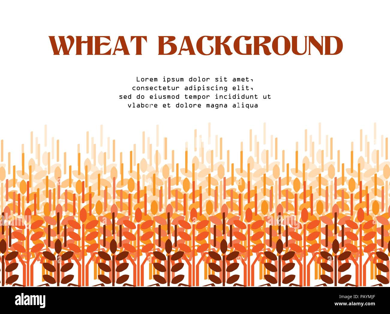 Wheat ears pattern. Vector agriculture background. Wheat field - Stock Vector