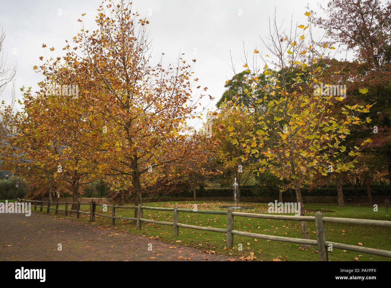 Autumn or Fall garden scene on a grey cloudy day with trees and ...