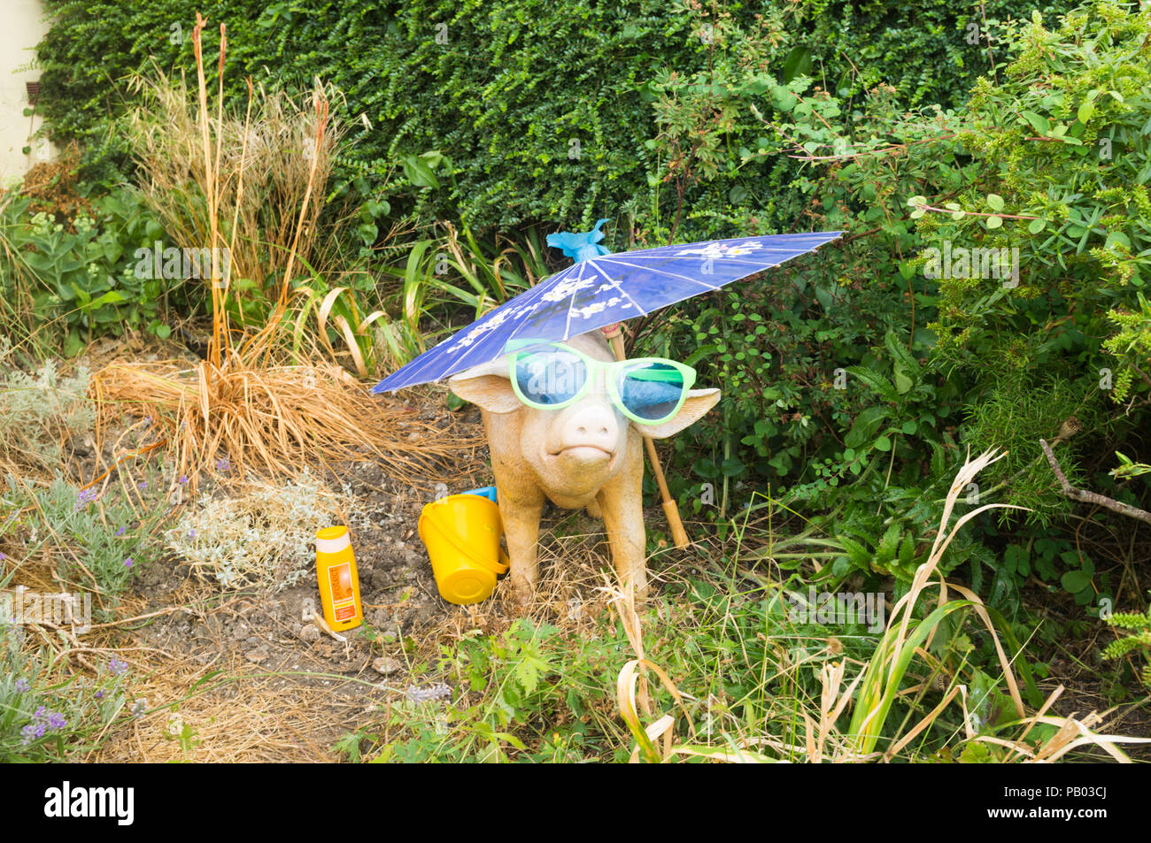 Model pig with suncream, sunglasses, water and shade in a front garden, UK weather - Stock Image