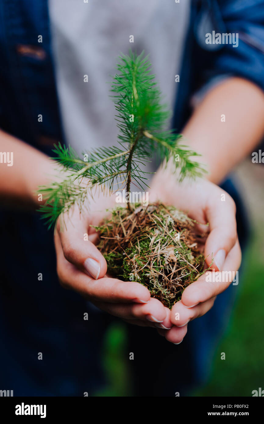 Female hand holding sprout wilde pine tree in front in nature green forest. Earth Day save environment concept. Growing seedling forester planting - Stock Image
