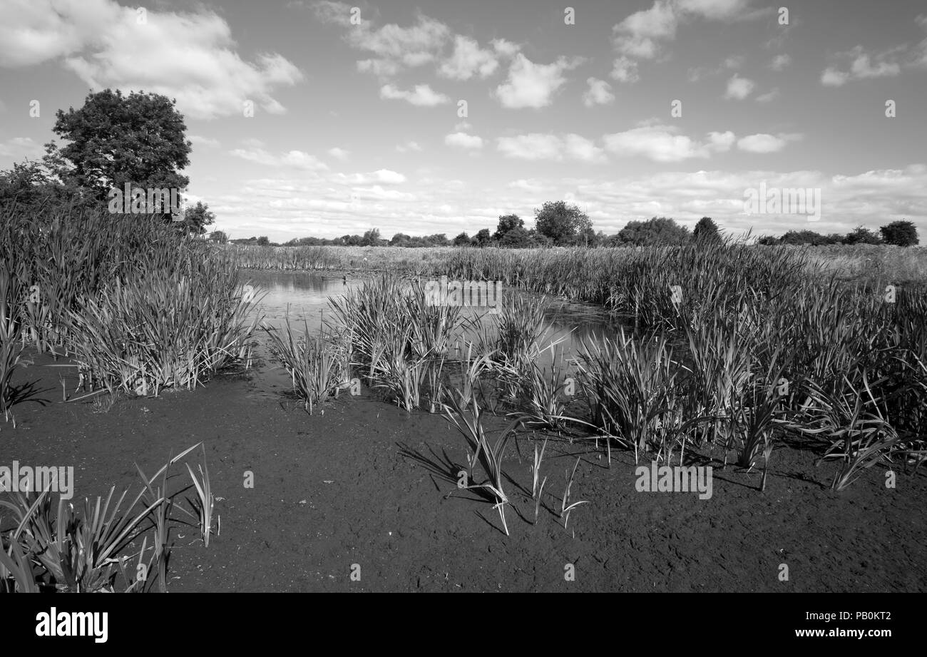 Water hole drying up in the UK summer heatwave 2018 - Stock Image