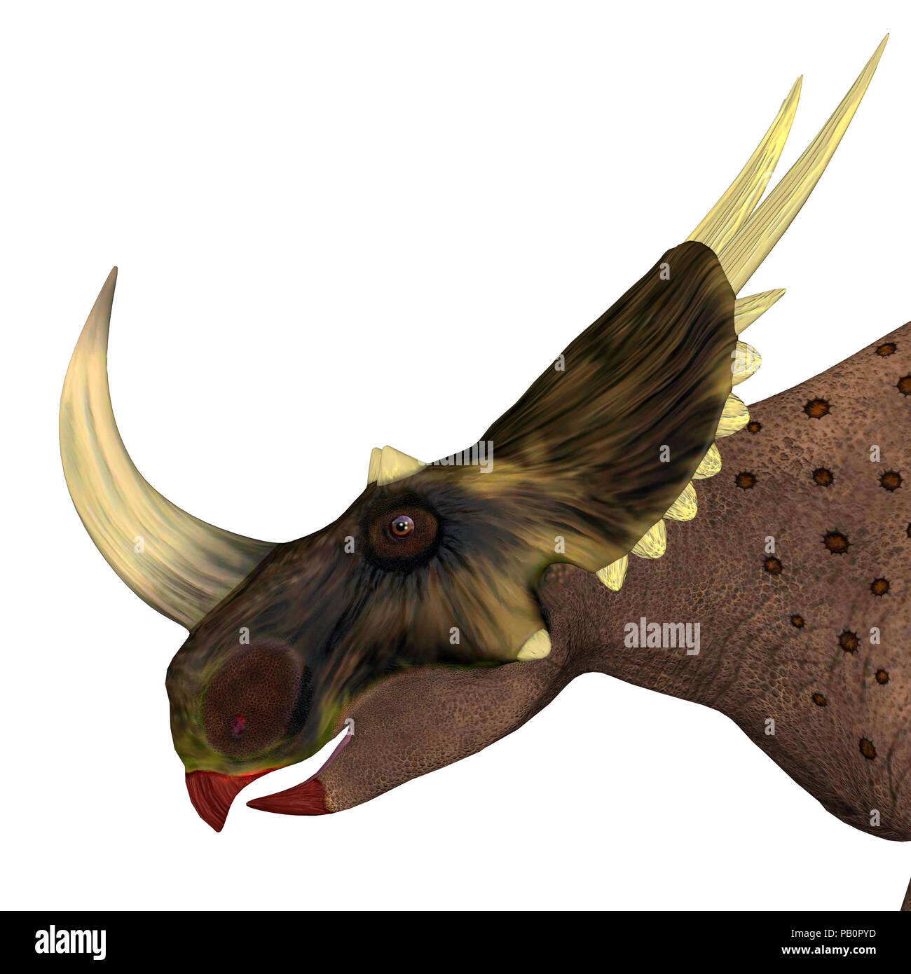 Brown Rubeosaurus Dinosaur Head - Rubeosaurus was a herbivorous Ceratopsian dinosaur that lived in North America during the Cretaceous Period. - Stock Image