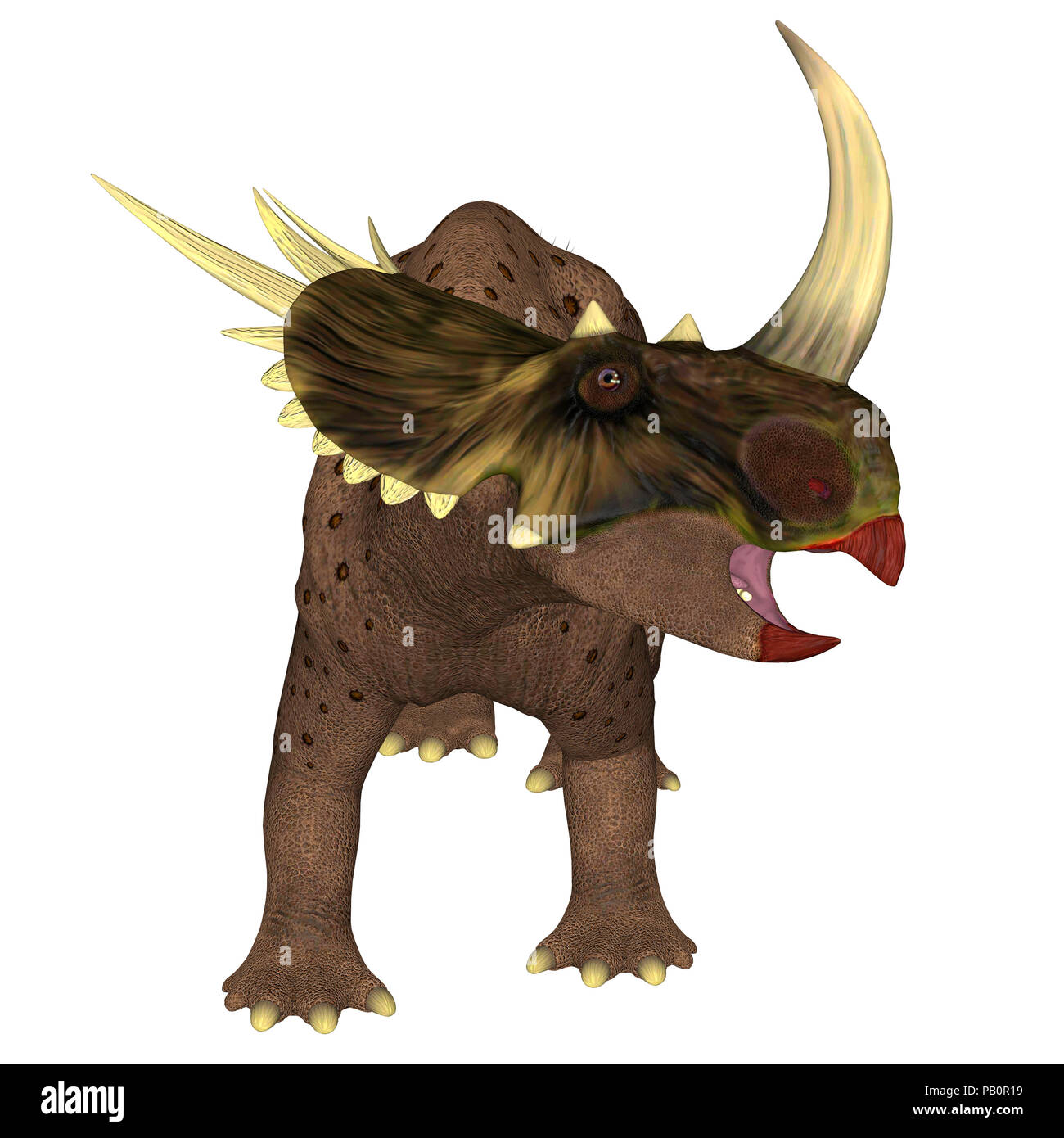 Brown Rubeosaurus Dinosaur on White - Rubeosaurus was a herbivorous Ceratopsian dinosaur that lived in North America during the Cretaceous Period. - Stock Image