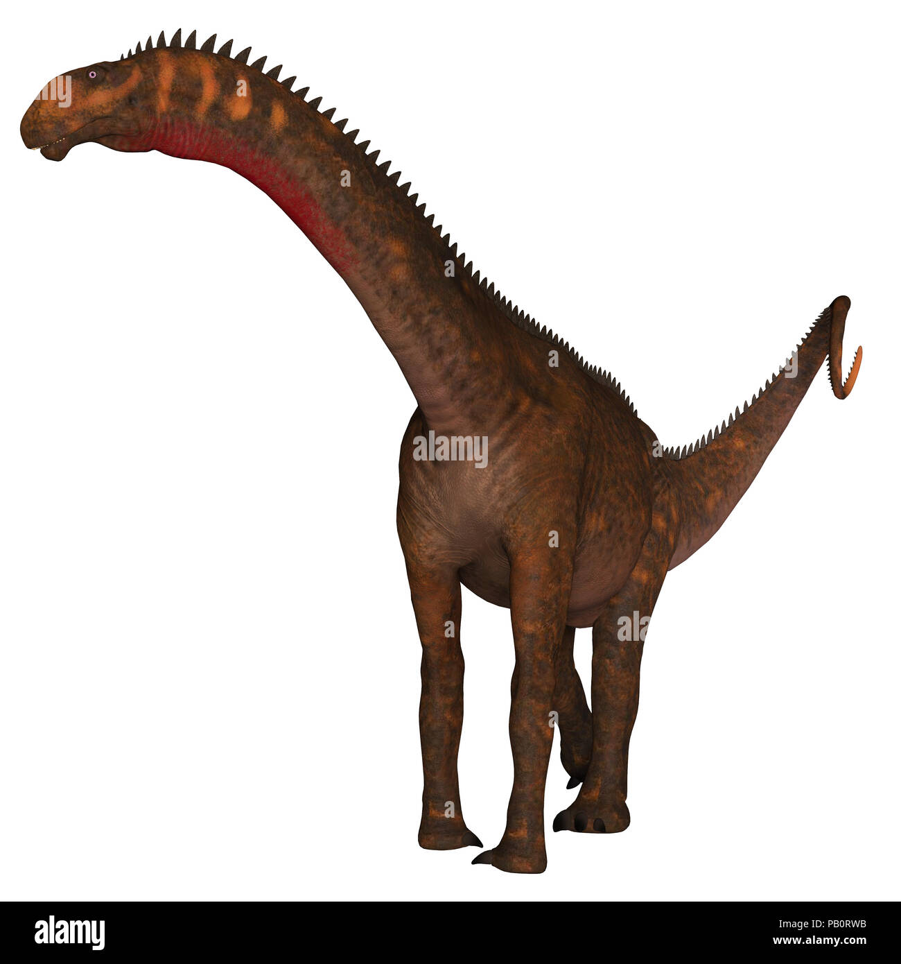 Mierasaurus Dinosaur on White - Mierasaurus was a herbivorous sauropod dinosaur that lived in Utah, USA during the Cretaceous Period. - Stock Image