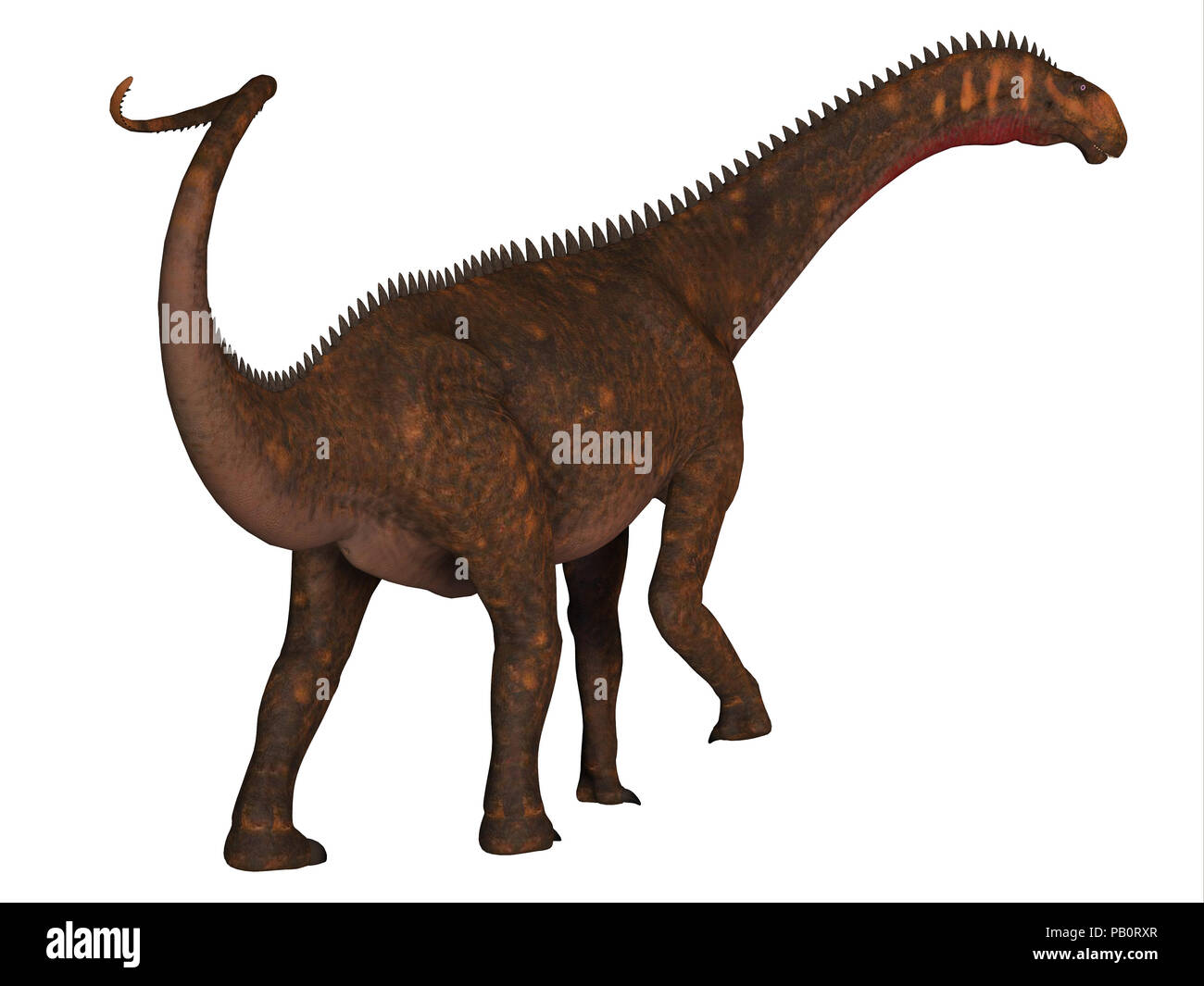 Mierasaurus Dinosaur Tail - Mierasaurus was a herbivorous sauropod dinosaur that lived in Utah, USA during the Cretaceous Period. - Stock Image