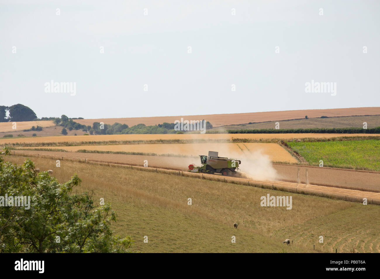 A combine harvester at work during the UK 2018 heatwave  in Wiltshire England UK GB - Stock Image