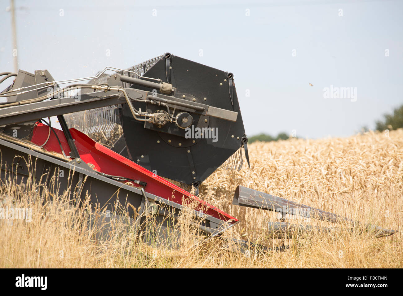 A combine harvester cutting wheat during the UK 2018 heatwave. Wiltshire England UK GB - Stock Image