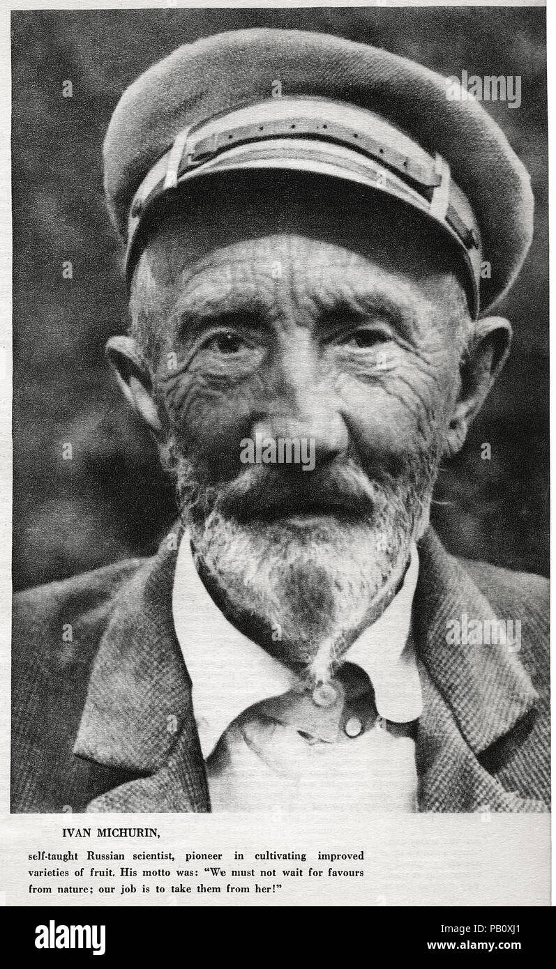 Ivan Vladimirovich Michurin (1855-1935), Russian Horticulturist, created more than 300 Varieties of Fruit Plants, Portrait - Stock Image