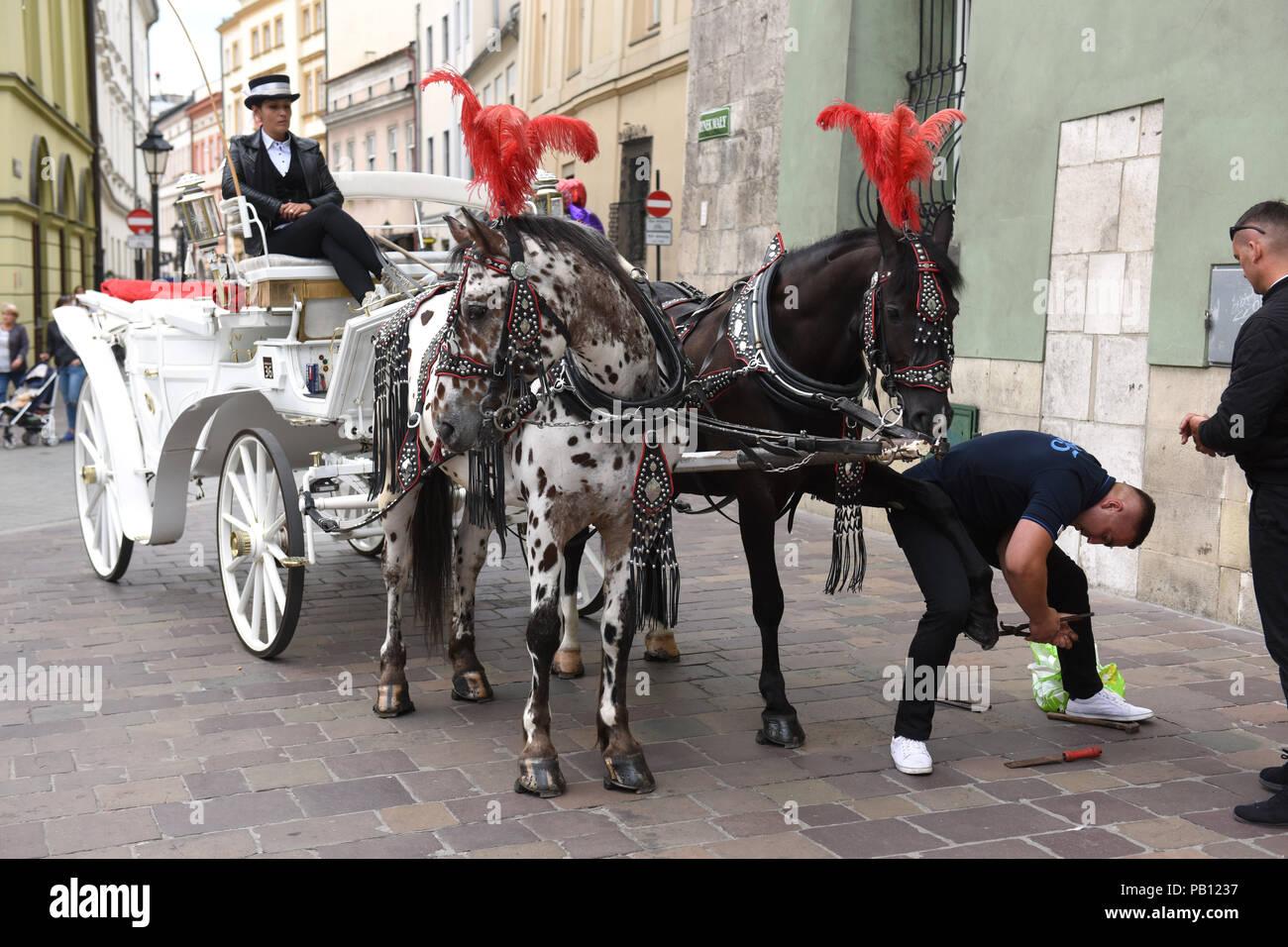 Polish blacksmith changing reparing horses show Horse drawn carriage in Krakow Poland - Stock Image