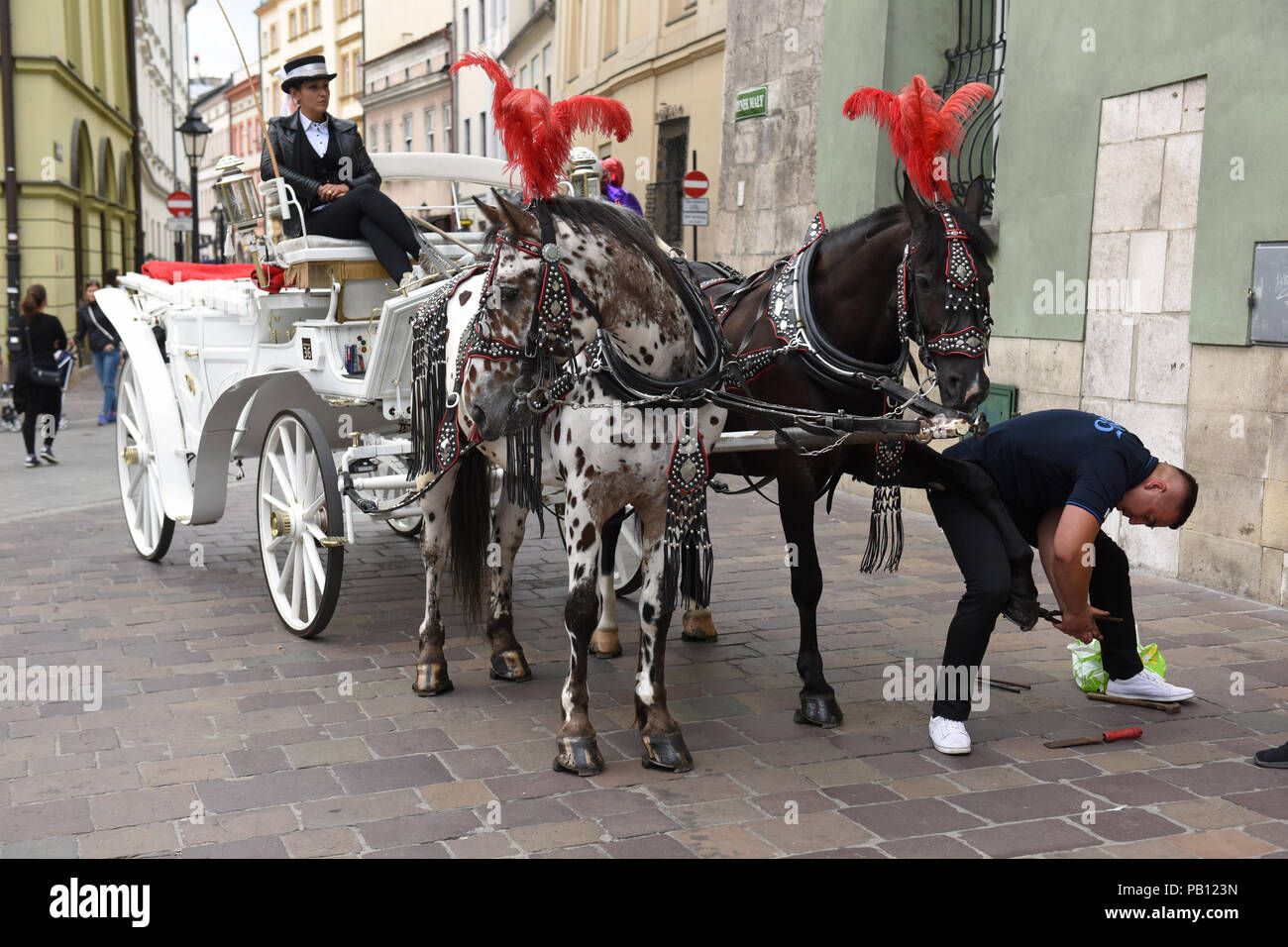 Polisk blacksmith changing reparing horses show Horse drawn carriage in Krakow Poland - Stock Image