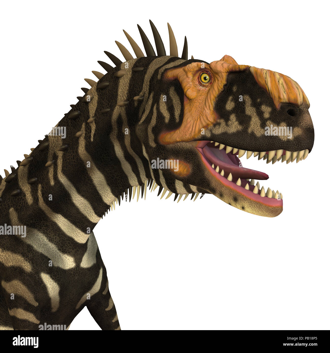 Rajasaurus Dinosaur Head - Rajasaurus was a carnivorous theropod dinosaur that lived in India during the Cretaceous Period. - Stock Image