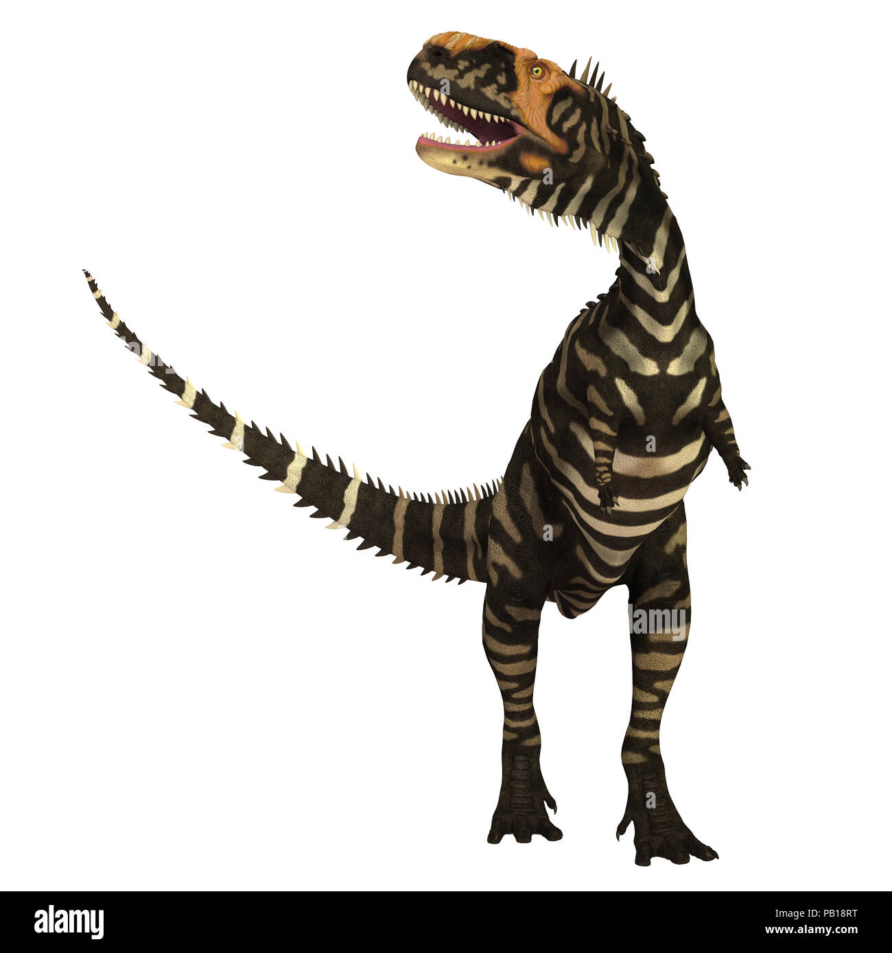 Rajasaurus Dinosaur on White - Rajasaurus was a carnivorous theropod dinosaur that lived in India during the Cretaceous Period. - Stock Image