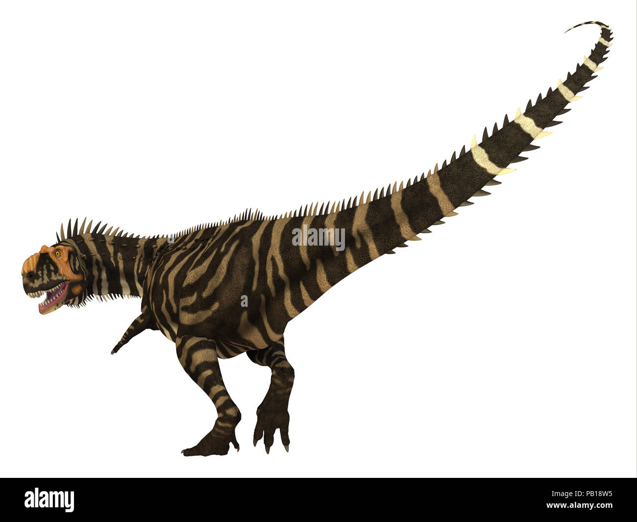 Rajasaurus Dinosaur Tail - Rajasaurus was a carnivorous theropod dinosaur that lived in India during the Cretaceous Period. - Stock Image