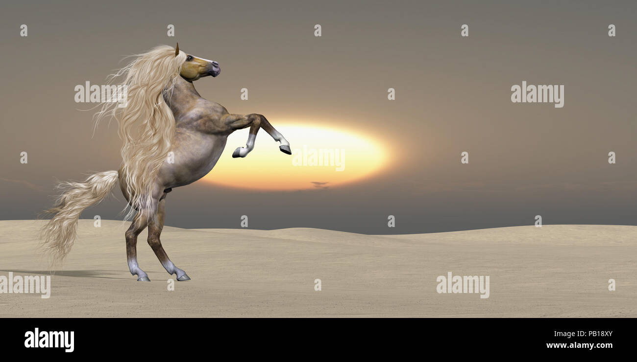 Sand Dune Palomino Horse - The sun sets on a golden Palomino wild stallion showing his power and vitality in a desert landscape. - Stock Image