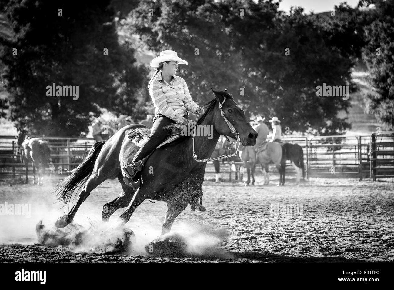 Racing rider on horseback: Real cowgirl shows true grit as her horse leans, digs in during a barrel race stirring up dust from its hooves as they turn - Stock Image