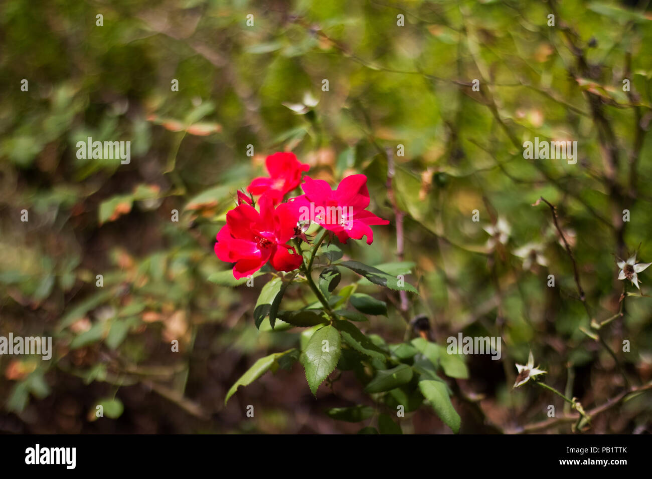 Beautiful flowers blooming in flower garden at the city park stock beautiful flowers blooming in flower garden at the city park izmirmasajfo